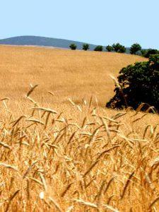 plan-agroalimentario-nacional